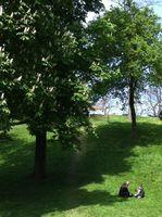 15 ah les beaux arbres
