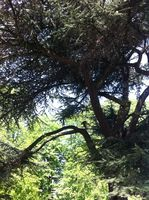 67 arbres