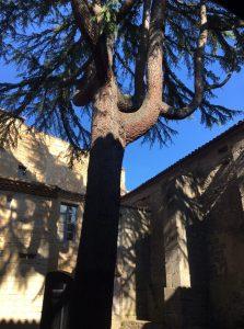 cloître de l'abbaye Lagrasse